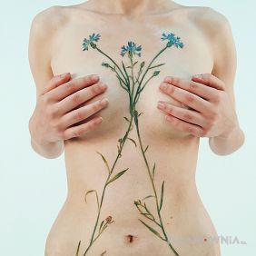 Błękitne kwiatki