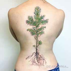 Roślina i korzenie