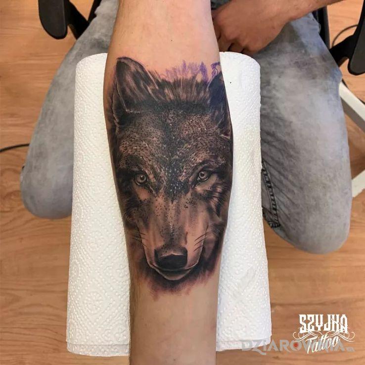 Tatuaż wilczysko in progress - realistyczne