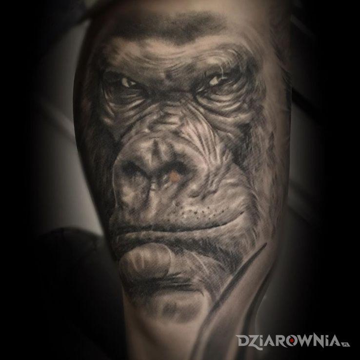 Tatuaż gorilla - realistyczne