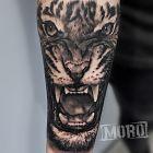 Tygrys, dziki kot