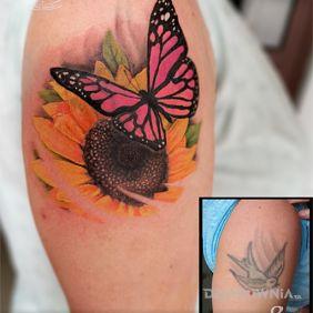 Cover motyl, słonecznik