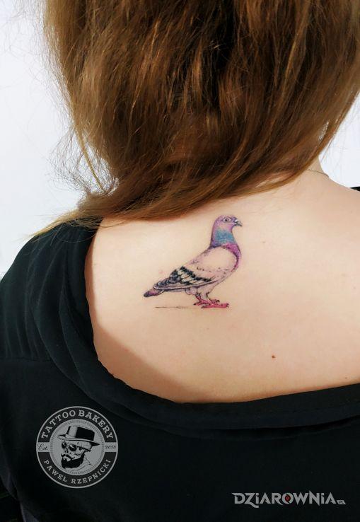 Tatuaż gołąb - zwierzęta