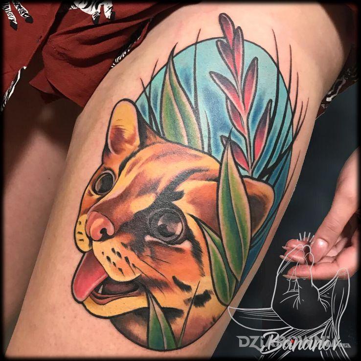Tatuaż koteł - zwierzęta