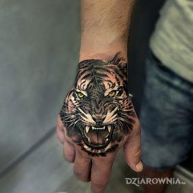 Tygrys na dłonie