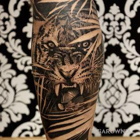 Tygrys na łydce