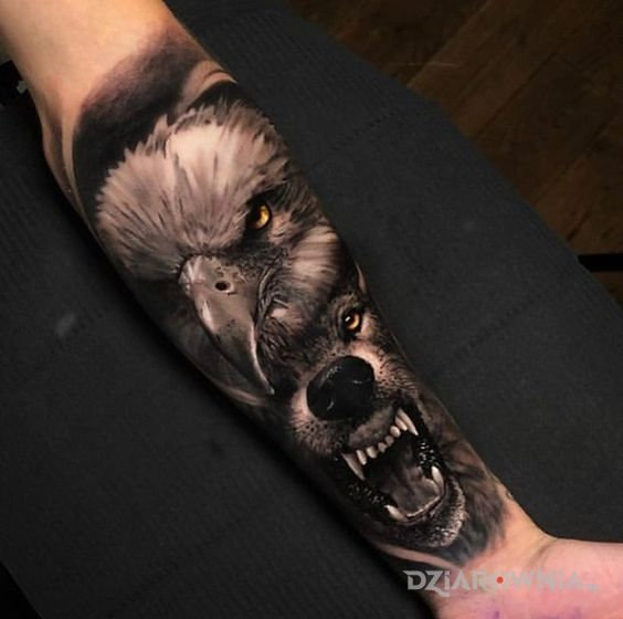 Tatuaż orzeł  wilk w motywie zwierzęta i stylu realistyczne na przedramieniu