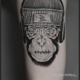 Małpa BdoR