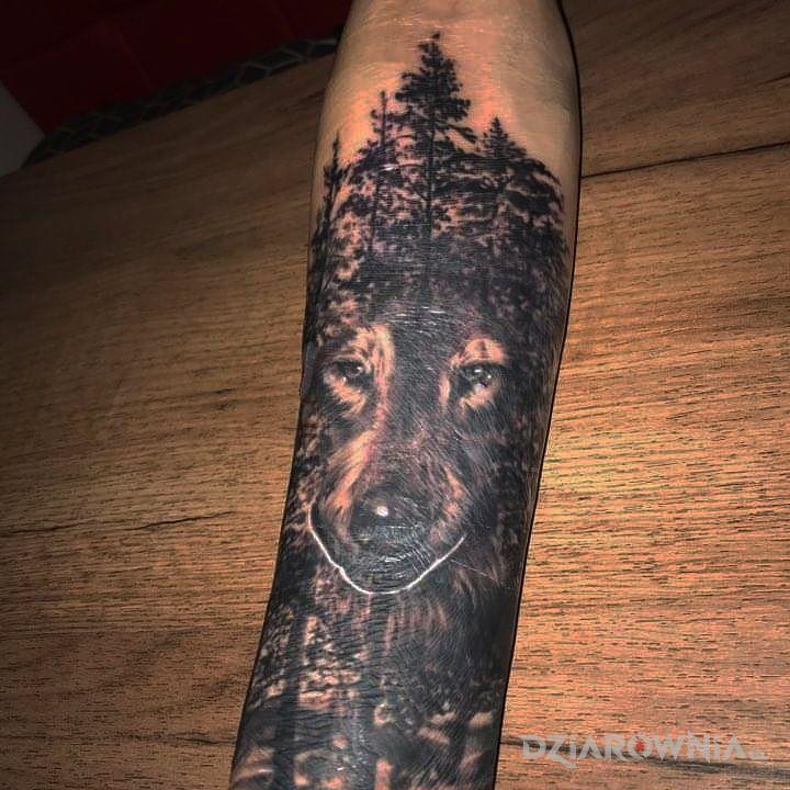 Tatuaż zabłąkany wilk - zwierzęta