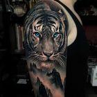 Niebieskooki tygrys