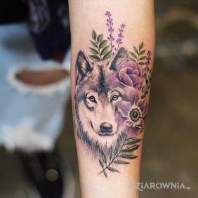 Wilk z fioletem