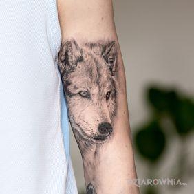 MEGA realistyczny wilk!