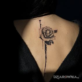 Róża realizm rozlana farba