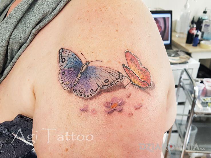 Tatuaż motyle - kolorowe
