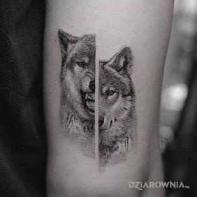 Dwa oblicze wilka