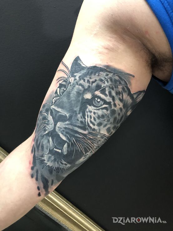Tatuaż kotek - zwierzęta