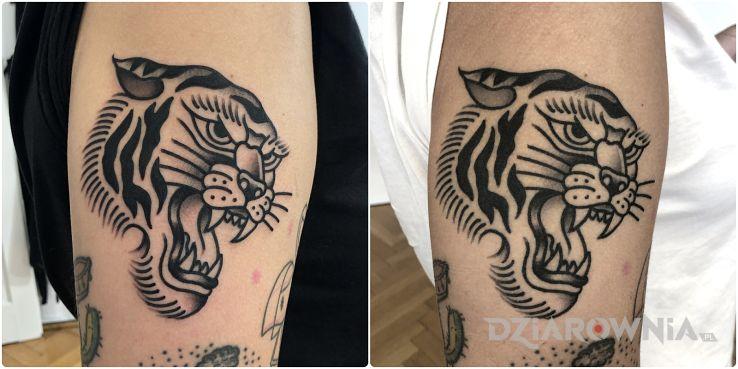 Tatuaż tygrys  zagojony vs świeży - zwierzęta