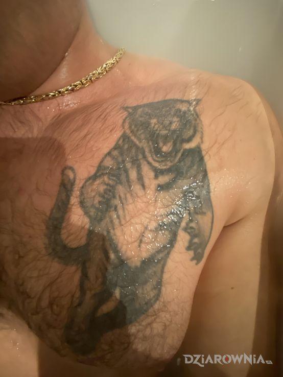 Tatuaż tygrys w motywie zwierzęta i stylu graficzne / ilustracyjne na klatce