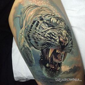 Nurkujący tygrys