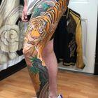 Przepiękny tygrys