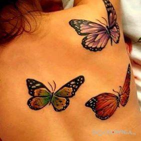 Motyle na plecach