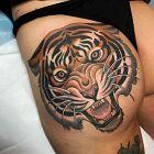 Tygrys i jego kły
