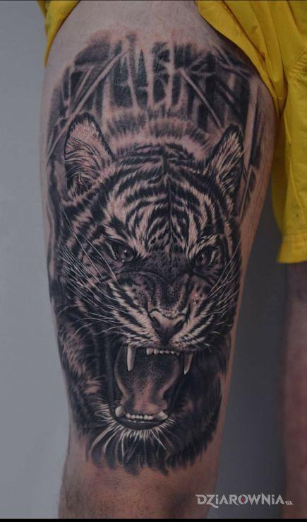 Tatuaż Tygrys Autor Stachyra Tomek Dziarowniapl