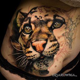 Kot z Afryki