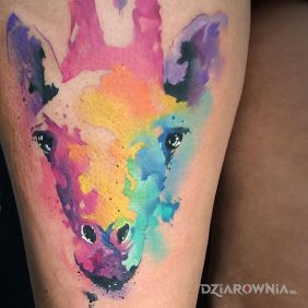 Kolorowa żyrafa