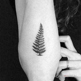 Symbol Nowej Zelandii, fern frond