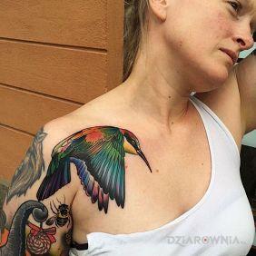 Kolorowa ptaszek