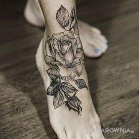 Róża bez koloru