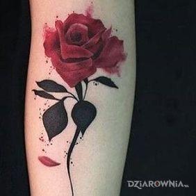 Czerwona różyczka