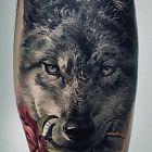 Wilk z roza