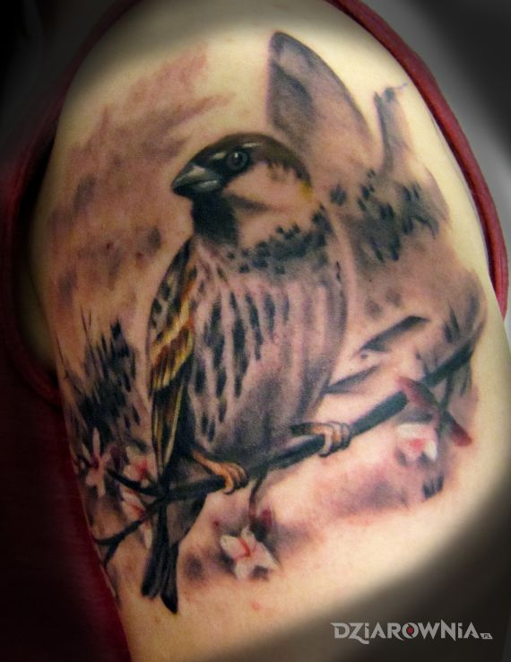 Tatuaż wróbelek w motywie zwierzęta na ramieniu