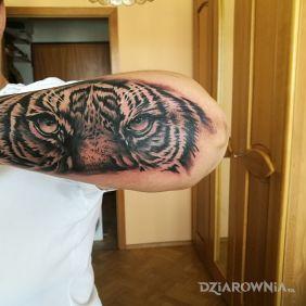 Tygrys...