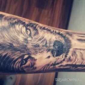 Wolf, wilk