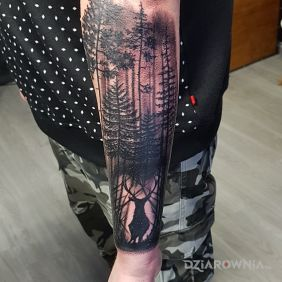 Forest and Deer
