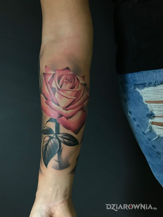 Tatuaż róża - kolorowe